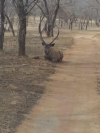 Ranthambore National Park Photo