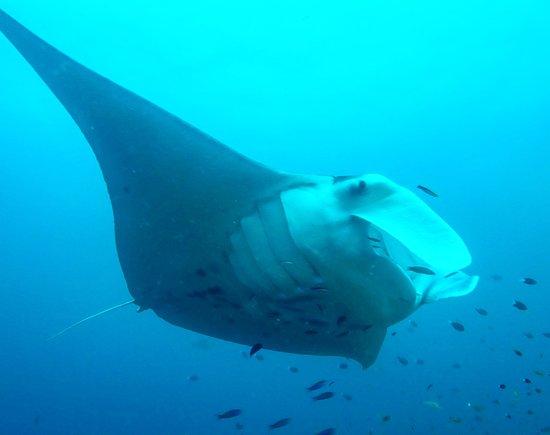 DPM Diving Nusa Penida