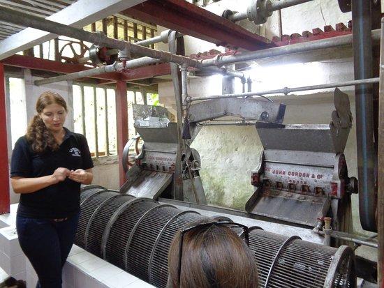 Minca, Colombia: Victoria coffee farm tour