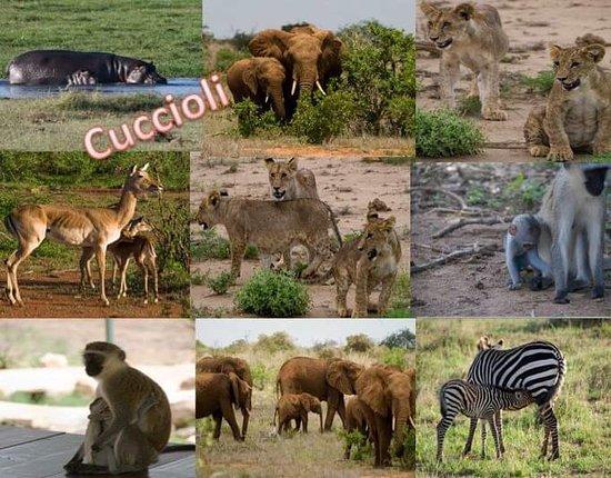 KenyaTour con Rashid - Agenzia Kenyatour