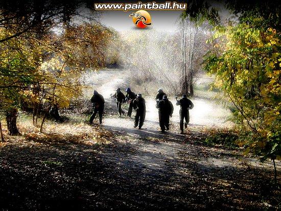 Tokol, Ungern: woodland