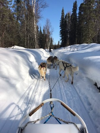 Mush with Iditarod champs!