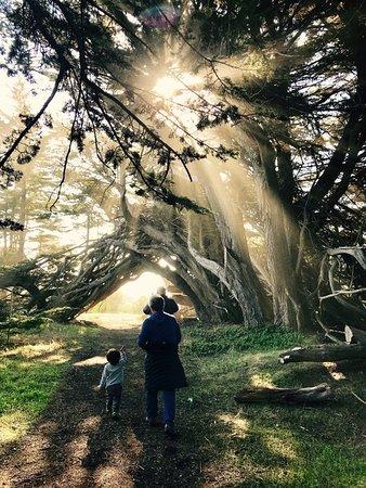 The Sea Ranch, Kalifornia: Sea Ranch sun rays