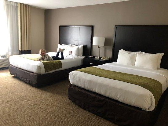 Comfort Inn & Suites San Diego - Zoo SeaWorld Area: Comfort Inn & Suites Zoo SeaWorld Area