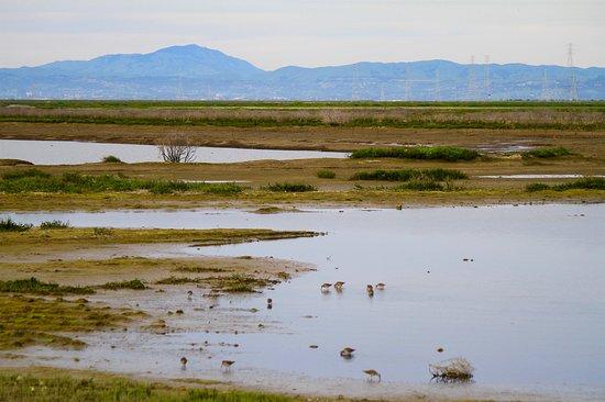 Redwood City, Kalifornie: Recently reclaimed wetlands of Bair Island marshlands