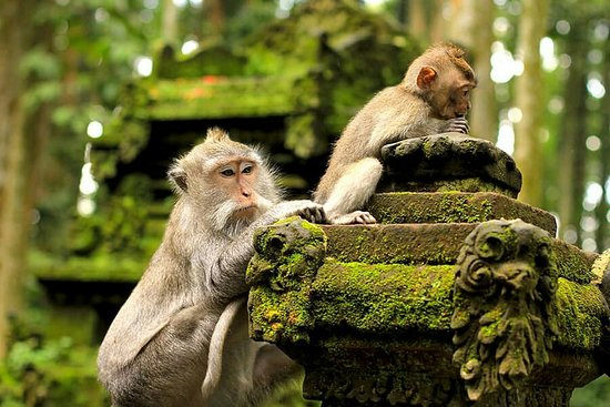 Sangeh, Indonesia: Beautiful place to look many monkeys