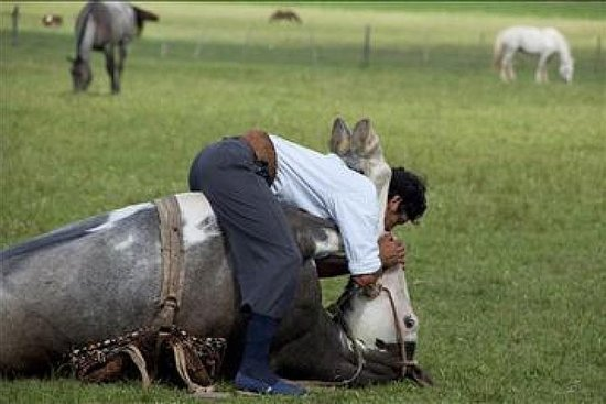 Liten gruppe Gaucho dag på en gård i...