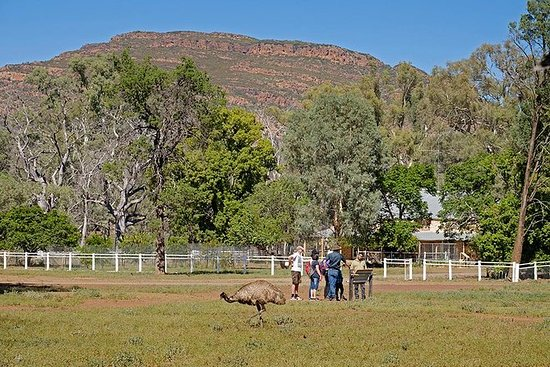 Yura Udnyu - Wilpena Pound Aboriginal...