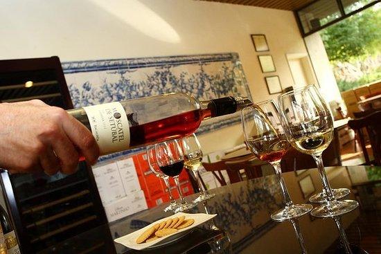 Vinhos com História - Venha prová-los...