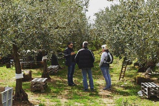 Experiencia de aceite de oliva