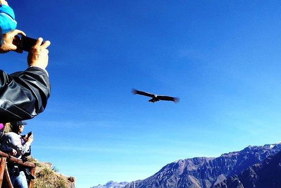 Da Arequipa: Colca Canyon 2 giorni 1