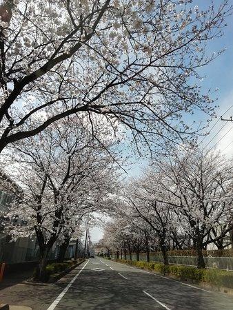 Satte, Japan: 幸手市