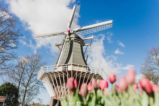 Rota Amsterdam