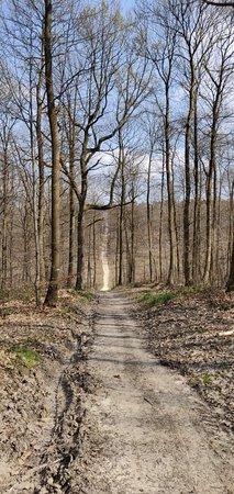 Val-d'Oise, Frankrijk: De beaux chemins escarpés en forêt de Montmorency ce weekend. Une très belle balade par un temps de printemps.