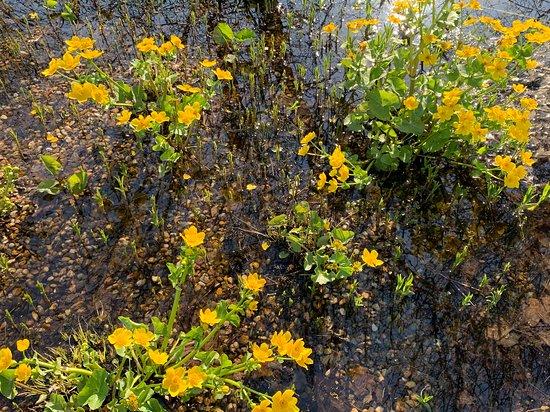 Terra Botanica: Ballade printanière