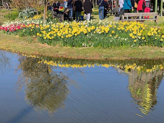Terra Botanica: Le miroir des tulipes