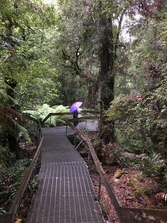 Warburton Rainforest Gallery: Warburton Rainforest