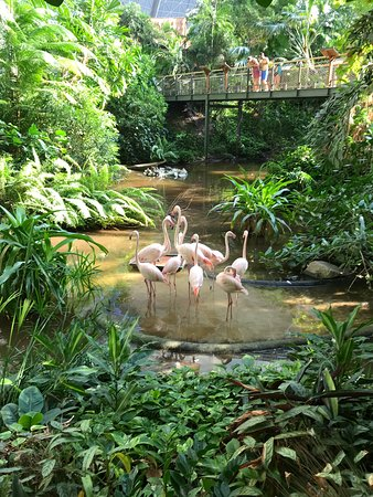 Tropical Islands: Flamingos! There is a nice area in which you can walk through, really feels like you are in the tropical forest and you'll see flamingos, fish, butterflies as well as the greenery.