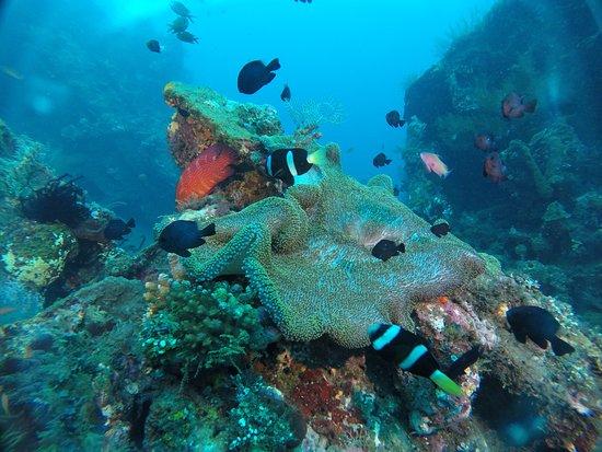 Adventure Divers Bali: Jemeluk Bay