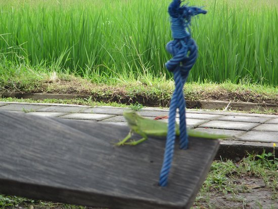 Iguana was an added attraction on the swing at Ju.