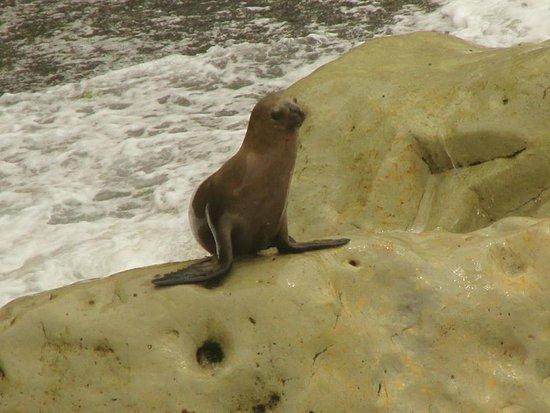 Loberia de Punta Loma: Saliendo al mar