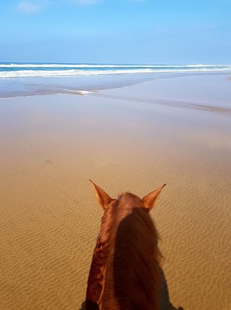 Tangier's horses ride