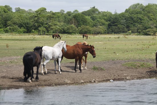 Ogmore-by-Sea, UK: Local horses enjoying the freedom and lovely Ogmore river.