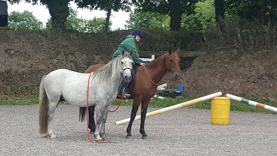Lee Valley Equestrian Centre: Natural horsemanship and bitless instruction