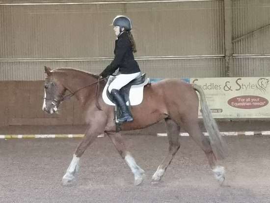 Lee Valley Equestrian Centre: Dressage and general flatwork improvement
