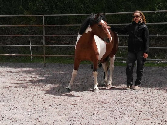 Lee Valley Equestrian Centre: Workshops and clinics with well known instructors and clinicians