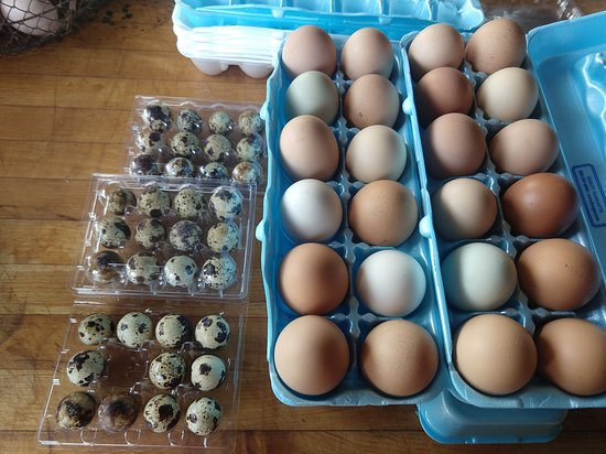 Bradfordsville, KY: Quail and chicken eggs fresh daily
