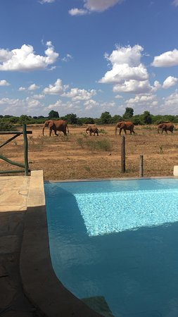 African Safaris Adventures: Right in front of the panoramic spot at Manyatta camp in Tsavo East.