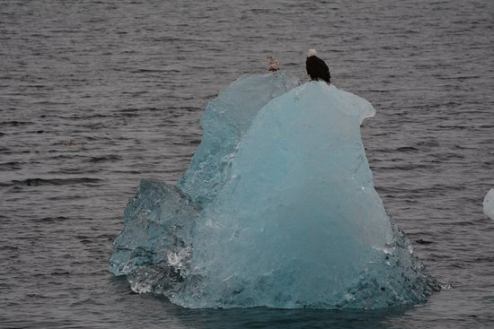 National Geographic Sea Lion: An Eagle on an Iceberg