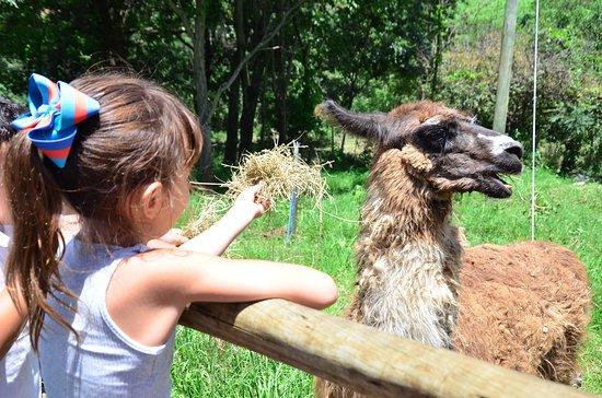 Itauna, MG: Alimentação de animais exóticos
