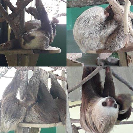 Gamboa Sloth Sanctuary