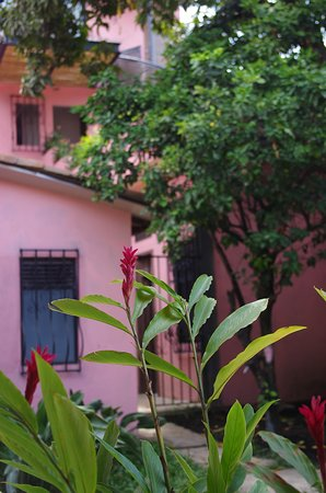 Cali, Colombia: Tropical