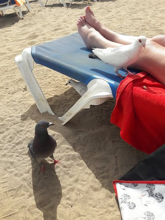 Playa Del Reducto: Gatecrashers