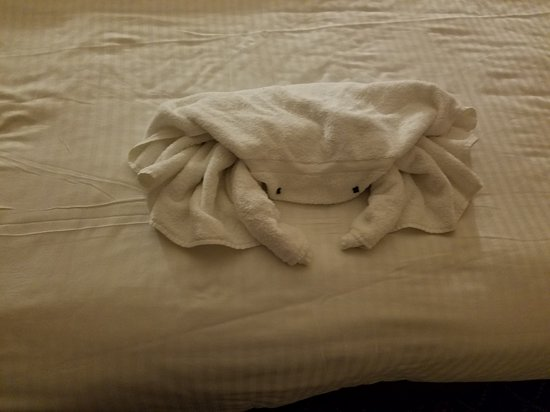 Norwegian Star: Cool towel animals