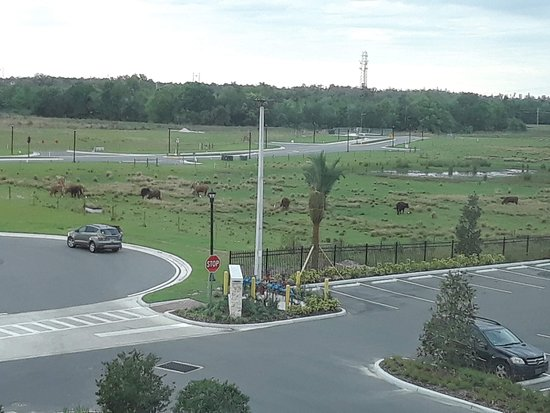 Hyatt Place Tampa/Wesley Chapel: The area around the hotel is being built up. There are lots of roads that go nowhere, in anticipation of new shopping and restaurants.