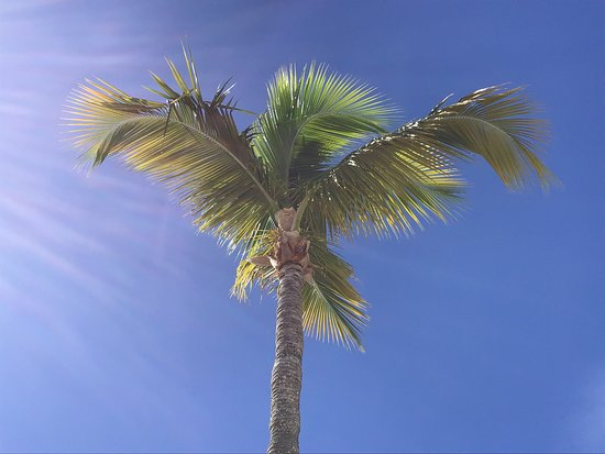Celebrity Summit: Tropical coconut tree