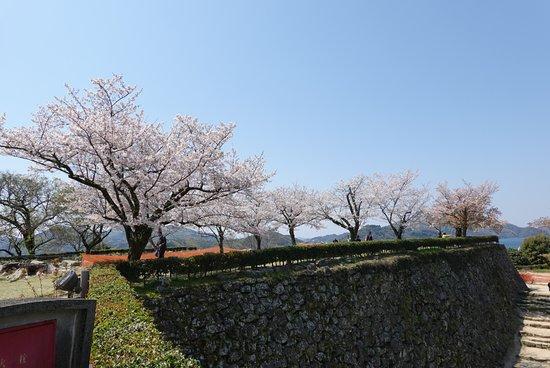 本丸に植えられた桜