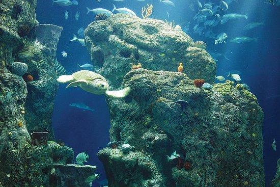 南卡罗来纳州水族馆入场