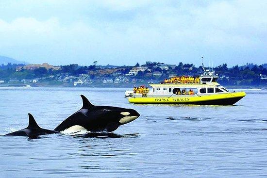 Half-Day Whale Watching Adventure da