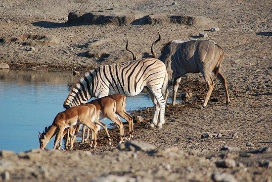 4 dagen Etosha National Park en ...
