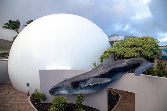 AquariumPlus - Entrée au Maui Ocean...