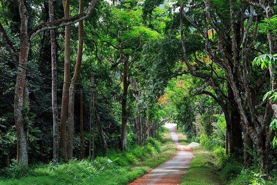 Cuc Phuong National Park 1 Tagestour...