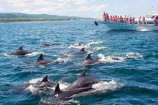 Fukuoka a Nagasaki: Dolphin Watching