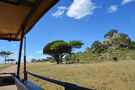 Safari in Tanzania National Parcks