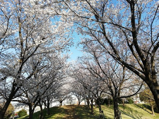 Yoshikawa, اليابان: 吉川市