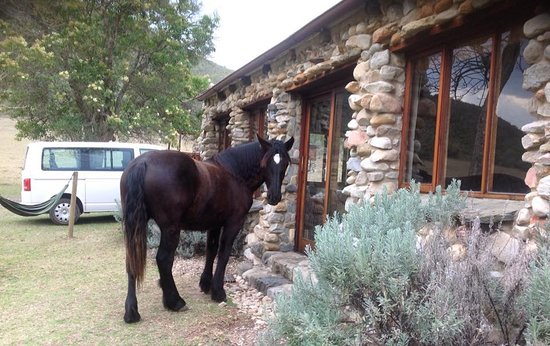 Giraffe View Safari Camp: Anyone home? Star visiting guests at Wildebeest Cottage
